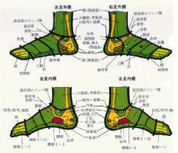 足の反射区3【耳つぼダイエット・整体・骨盤矯正は川口市の整体院・IUGへ】