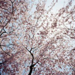春の養生法【川口市の整体院・リフレッシュハウスIUG】