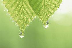 ウィルス予防に水分補給